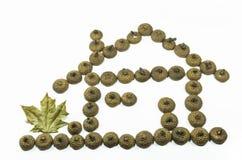 Дом жолудя стоковые фото
