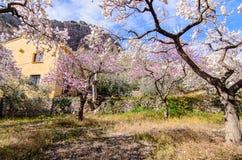 Дом за миндальными деревьями Стоковые Фото