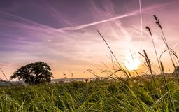 дом зеленого цвета травы Стоковая Фотография