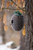 Дом зимы для птиц стоковое фото rf