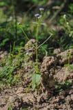 Дом или жилище earthworms Стоковые Фотографии RF