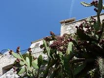 дом кактуса старая Стоковое фото RF