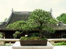 дом китайца бонзаев Стоковые Изображения RF