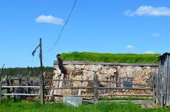 Дом коров в зиме стоковые фотографии rf