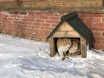 Дом кота в зиме Стоковое Изображение