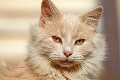 дом кота счастливая Стоковое Изображение RF
