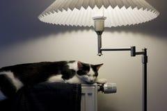 дом кота Стоковая Фотография RF