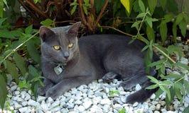 дом кота outdoors Стоковая Фотография