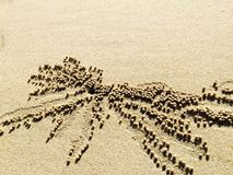 Дом краба Стоковое Изображение RF