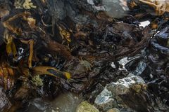 Дом крабов стоковое фото rf
