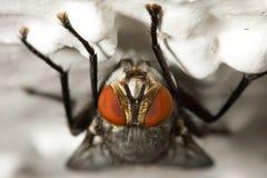 дом мухы Стоковая Фотография RF