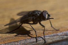 дом мухы Стоковое Изображение