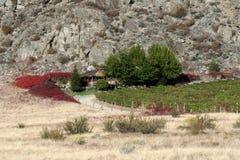 Дом на винограднике Стоковые Фотографии RF