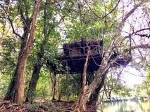 Дом на дереве в лесе Кералы konni стоковые фотографии rf