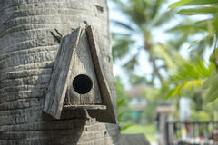 Дом на дереве для птиц Стоковые Фото