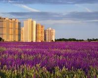 Дом на окраинах городка на краю blossoming поля Стоковые Изображения RF