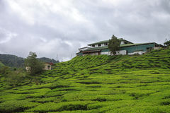 Дом на плантации чая Стоковые Фото
