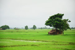 Дом на рисовых полях расположенных в Bago, Мьянме Стоковые Изображения