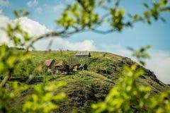 Дом на холме снял через листья Стоковая Фотография RF