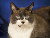дом общего кота Стоковые Фото