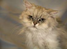 дом общего кота Стоковая Фотография RF