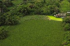 Дом портового района и зеленая природа Стоковое Изображение RF
