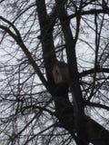 Дом птицы в дереве стоковое фото rf