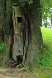 Дом птицы в дереве Стоковые Изображения RF