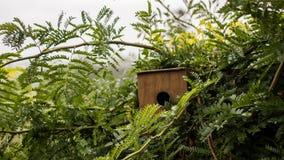 Дом птицы в кусте Стоковое Фото