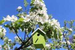 Дом птицы в цвести яблоне стоковое фото rf