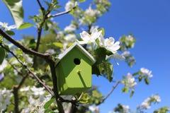 Дом птицы в цвести яблоне стоковое изображение rf