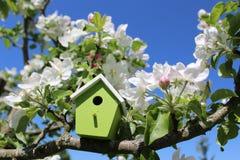 Дом птицы в цвести яблоне стоковое фото