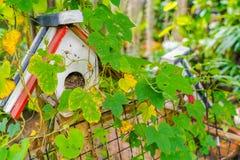 Дом птицы леса Стоковая Фотография RF