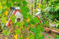 Дом птицы леса Стоковые Фото