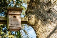 Дом птицы на ветви дерева Стоковая Фотография RF