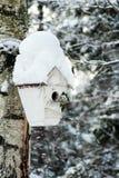 Дом птицы на дереве Стоковое Изображение RF