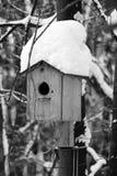 Дом птицы на дереве Стоковое фото RF