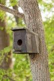 Дом птицы на дереве Стоковая Фотография