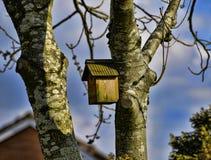 Дом птицы на пути полесья весной в Burnley Англии Стоковое Изображение RF