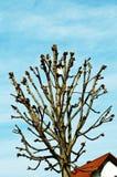 Дом птицы с tenement стоковые изображения rf