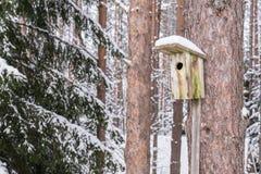 Дом птицы Snowy на сосне Деревянный aviary тимберса Коробка гнезда в лесе, Стоковое Фото