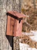 Дом синей птицы красного кедра на дереве Стоковые Изображения