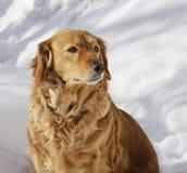 дом собаки Стоковое фото RF