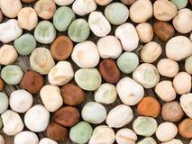 Дом-сохраненное семя гороха для засева весны Стоковое Изображение