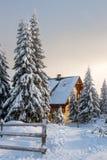 Дом среди высокорослых сосен стоковое фото rf