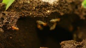 Дом строения муравьев в сухом поле акции видеоматериалы