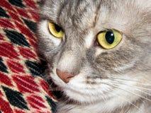 Дом съемки кота намордника Whiskered Стоковые Изображения