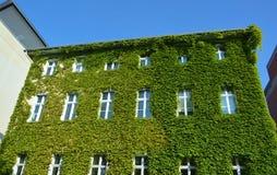 Дом с зелеными стенами Стоковые Изображения RF