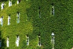 Дом с зелеными стенами Стоковые Фотографии RF