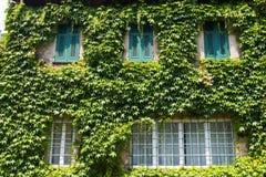 Дом с плющом Стоковая Фотография RF